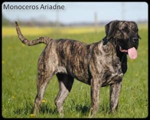 Monoceros-Ariadne1
