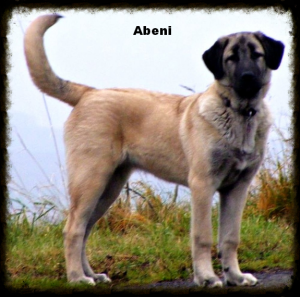 abeni4