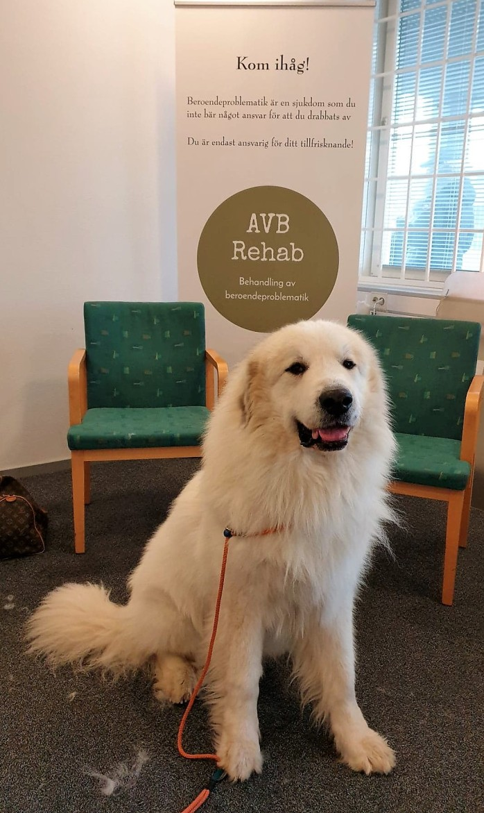 AVB-Rehab